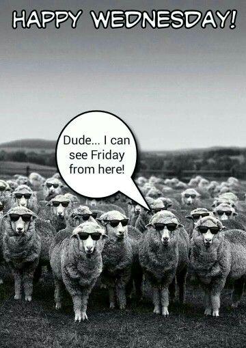 Funny Animal Wednesday Meme : Wednesday meme my memes pinterest