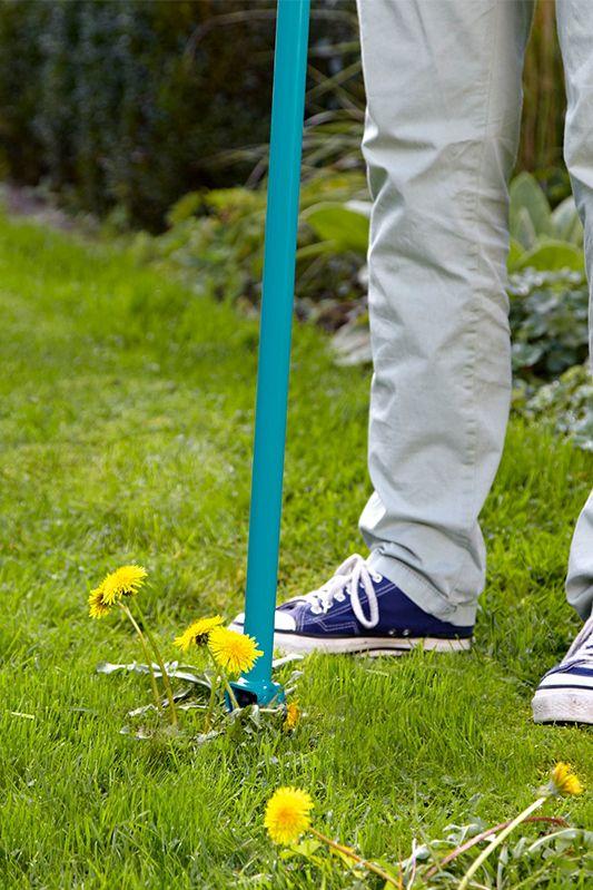 Unkraut In Der Rasenflache Ausstechen Bild 6 Gruner Rasen Unkraut Unkraut Im Rasen