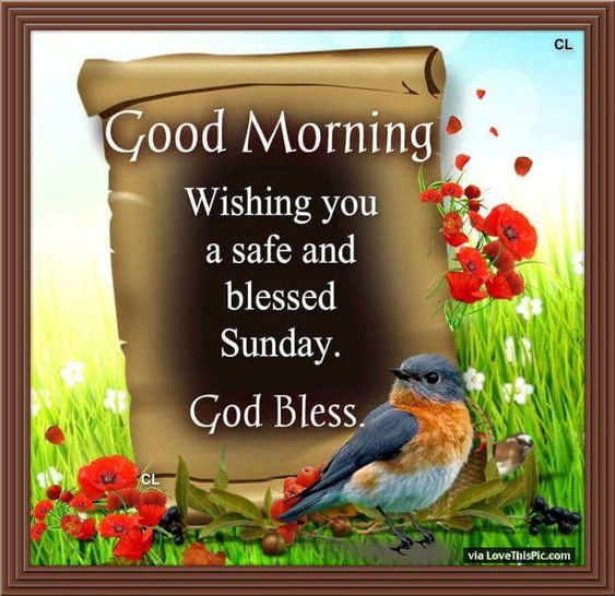 Good Morning Sunday Pick : Good morning wishing you a safe and blessed sunday