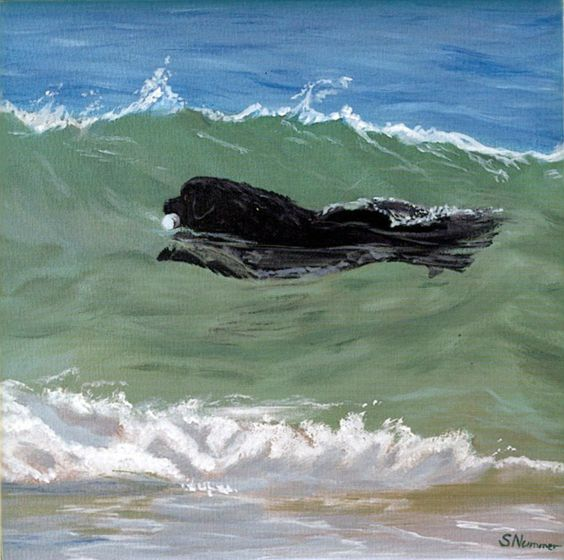 Newfoundland, The wave and Swimming on Pinterest Newfoundland Swimming