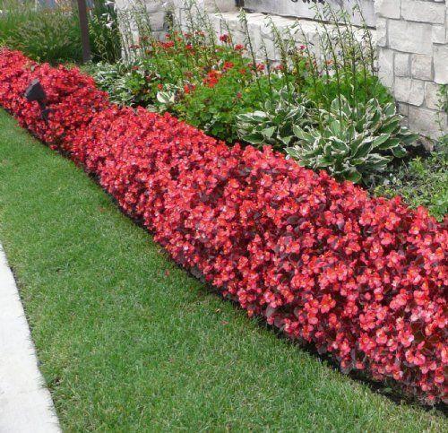 Begonia Flower Bed Front Yard Garden Design Front Yard Landscaping Design Front Yard Garden