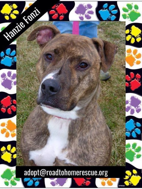 Photo Of Honzie Fonzie Adoptable Dogs Home Rescue Rescue Dogs