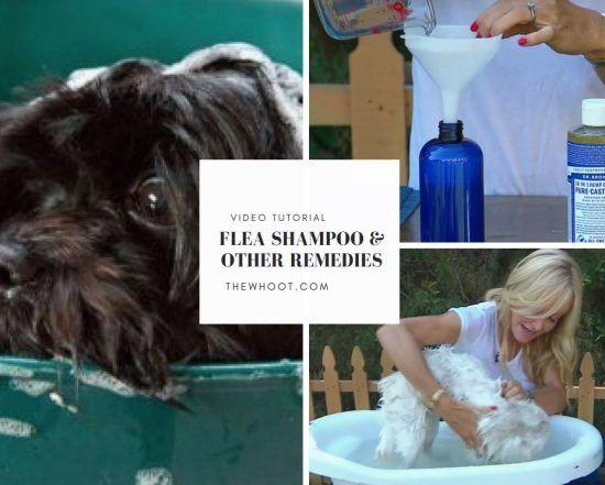 Dog Flea Shampoo Recipe 4 Ingredients Video Instructions Flea