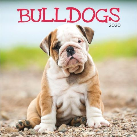 Bulldogs 2020 Wall Calendar As One Of America S Most Popular