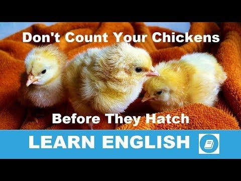 Don T Count Your Chickens Before They Hatch English Idiom