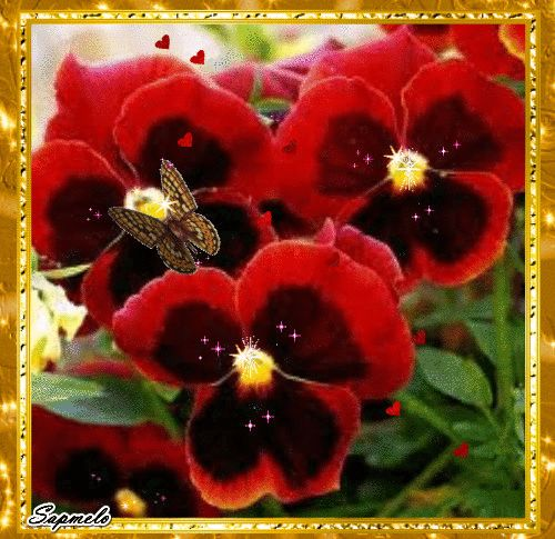 Sueli Melo (vovó coruja): Flor - Amor perfeito