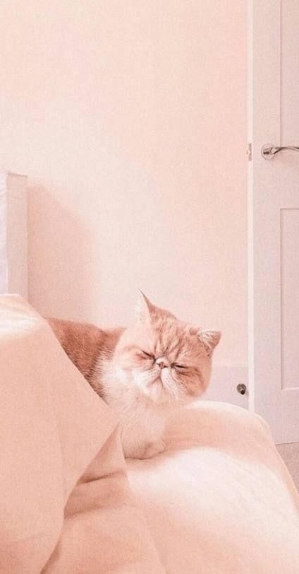 Pink Aesthetic Wallpaper Cat 38 Ideas Cat Aesthetic Cat Wallpaper Peach Aesthetic