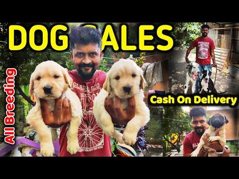 Dog For Sales All Puppys Sales Cash On Delivery Kennels In