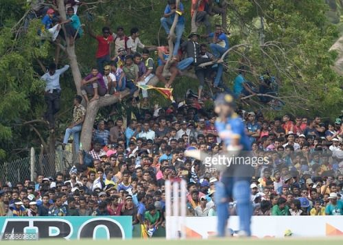 Sri Lankan cricket fans watch during the third One Day... #arbre: Sri Lankan cricket fans watch during the third One Day… #arbre
