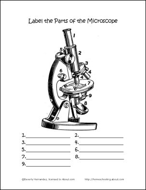 parts of the microscope printables wordsearch and more worksheets the o 39 jays and printables. Black Bedroom Furniture Sets. Home Design Ideas