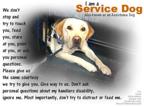 Legal advice for Assistance dogs?