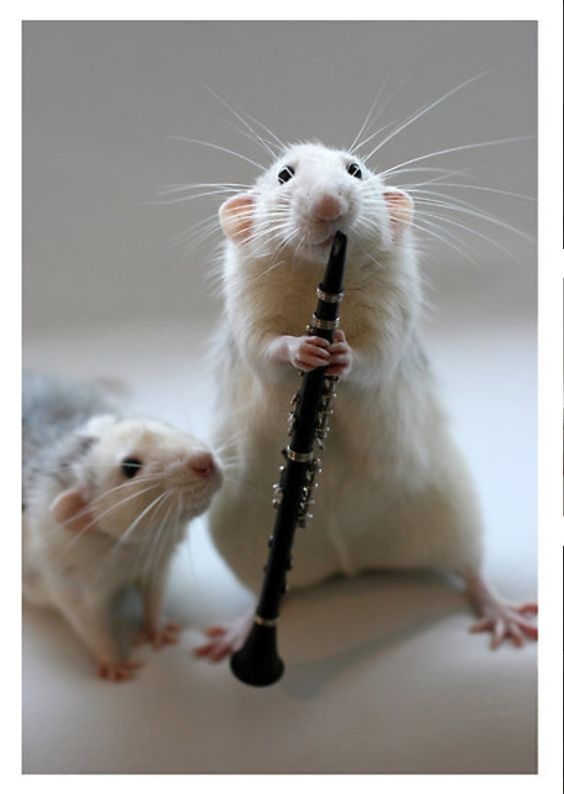 mouse playing a clarinet the instrument i play animals