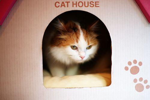 Cat House - http://www.1pic4u.com/blog/2014/10/07/cat-house/