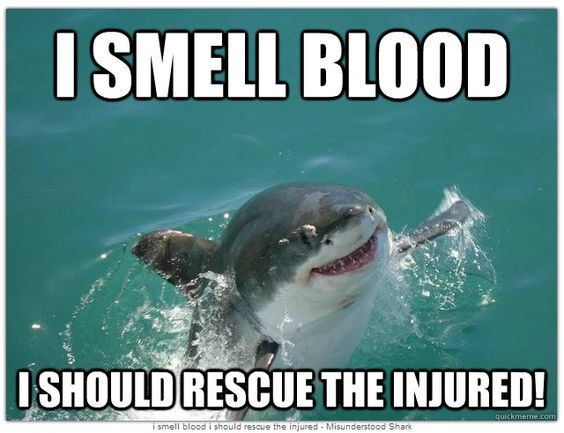 3bb0f6b1ea27c21124c5cb3ca7db9c4f hait misunderstood shark staaahp so many tickles funny shark meme image for facebook