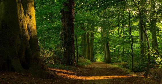 beautiful-forest:
