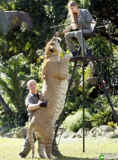 giant animals 25 There are giants out there. GIANTS I tell ya! (33 Photos)