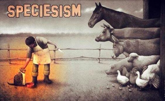 #EndSpeciesism #GoVegan:
