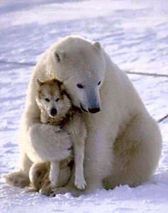 犬とかわいいクマ