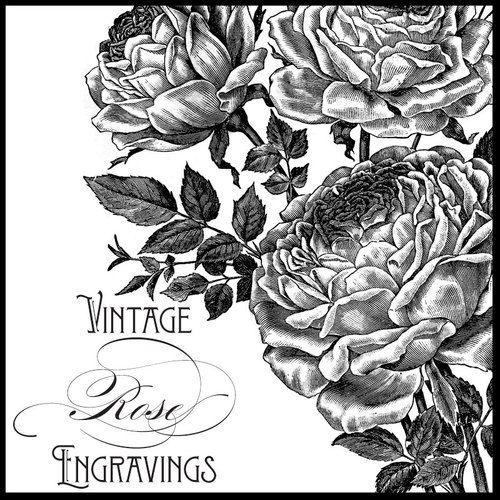 Vintage Rose Engravings Graphics