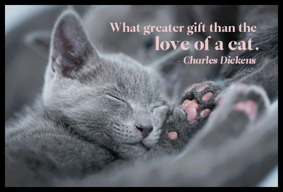 Love of my Cat BB