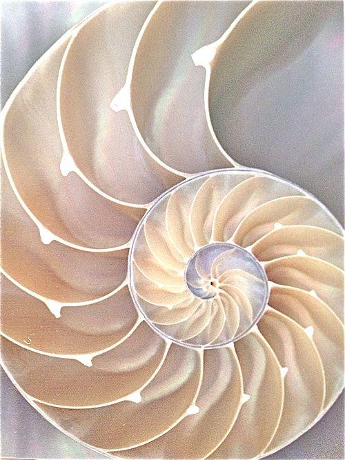 Geometric patterns found in nature are so amazing! #fibbonccispiral