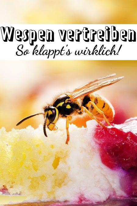 Wespen Vertreiben Welche Hausmittel Helfen Wirklich Lecker Wespen Vertreiben Vertreiben Hausmittel