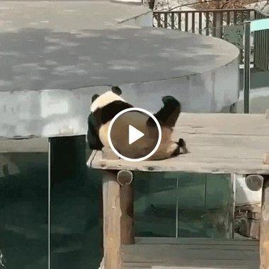 Kung -fu panda dando uma relaxada em seu dia de folga