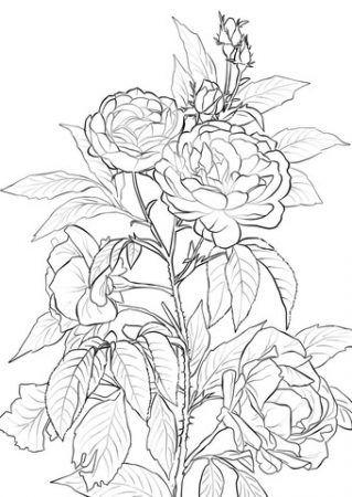 Rosen Ausmalbilder Malvorlagen Blumen Blumenzeichnung Blumenmalvorlagen