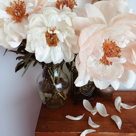 xokrista: Even when they perish and fade, peonies are still stunners My prettiest have a few notes.