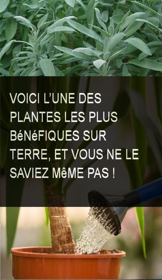 Pin On Astuce Sante