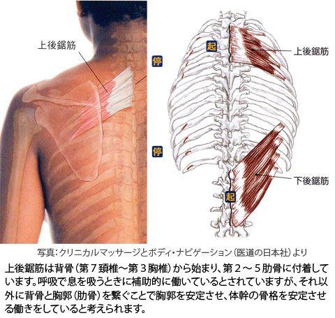 内側 痛い が の 甲骨 肩