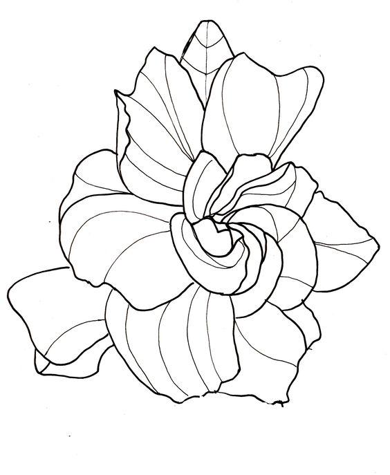 Flower Child Line Drawing : Line drawing flowers gardenia drawings pinterest