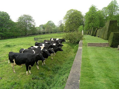 ha-ha Wall alternative to fencing when trying to keep cattle out of house yard but not destroy view: