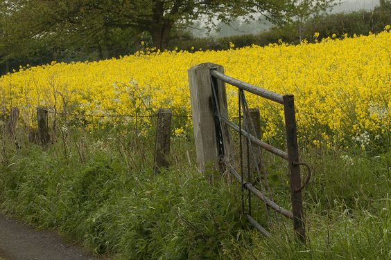 Farm fence & gate, Shropshire HFF explored #414 by Deirdre Snook, via Flickr