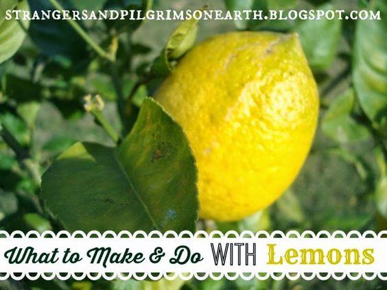 Strangers & Pilgrims on Earth: Uses for and How to Dry Lemon Peel ~ Citrus Series