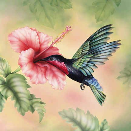 Painting of a beautiful Hummingbird