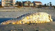 A strange creature that washed ashore on Folly Beach in South Carolina this past weekend has been identified. The odd,...