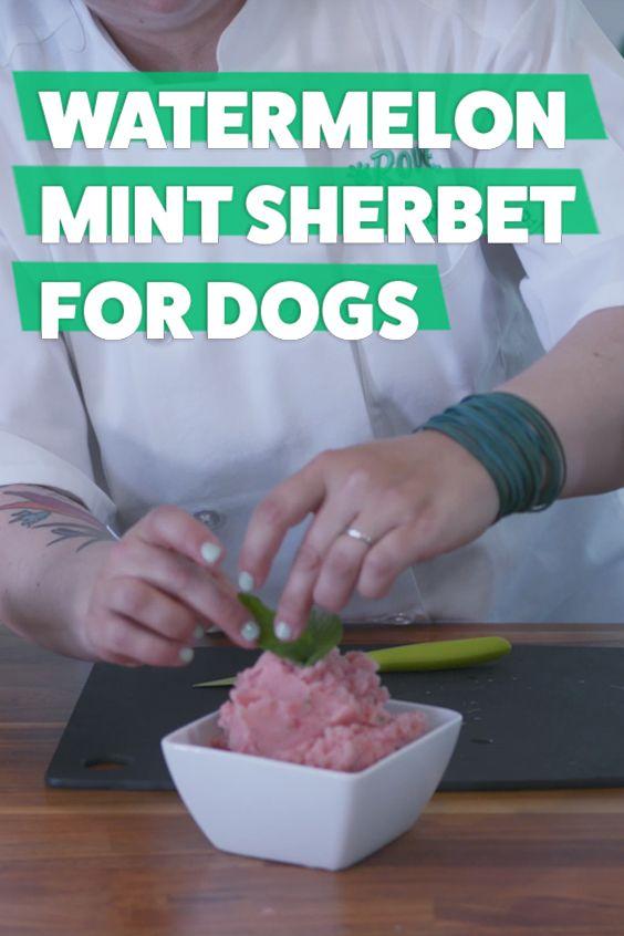 Refreshing Watermelon Mint Sherbet For Dogs Recipe Watermelon