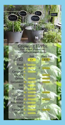 Growing Herbs In Sun And Part Shade Growing Herbs In Pots Outdoors Porch Herb Garden Diy Herbs Herbs Indoors Growing Herbs
