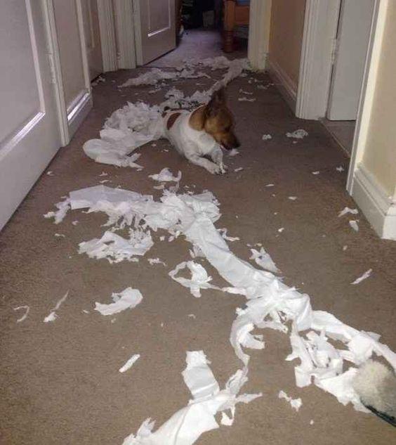Papier toilette | 15 mots qui prennent un tout nouveau sens quand on a un chien