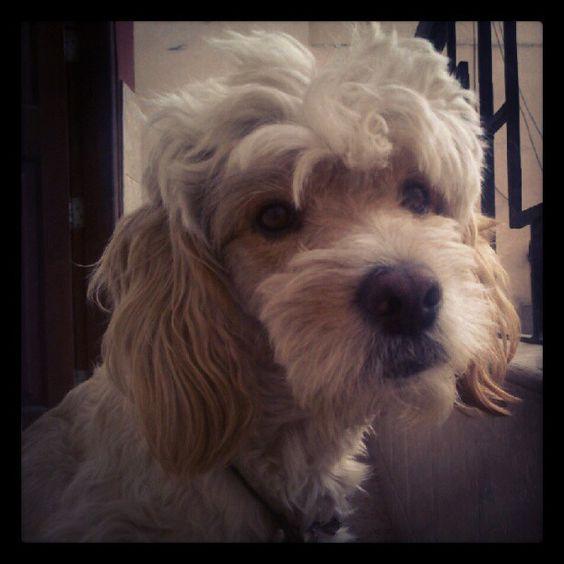 El es mi guapo bebe Charlie @solocountry's photo