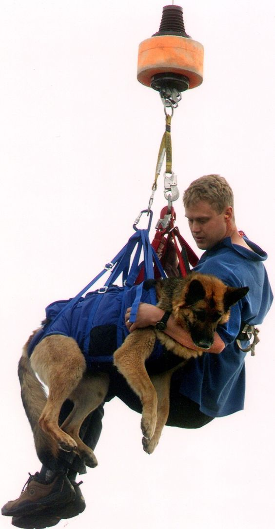 Search and Rescue Dogs of Tasmania