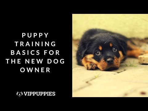 Top Puppy Training Tricks For The New Dog Owner 3 Easy Things To