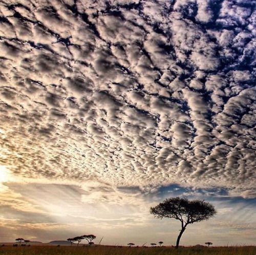 "sandylamu: "" Afrika, Photo Ninian Lowis """