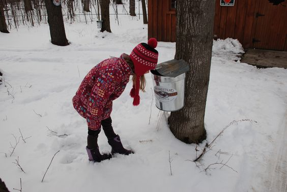 Enjoy the sweetest event of the year, Maple Weekend, March 19-20 and April 2-3, 2016! www.goadirondack.com