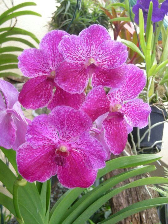 Orchids I like