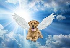 Bible Animals Heaven Yahoo Image Search Results Animal Line Drawings Dog Heaven Animals
