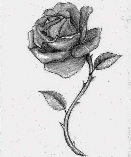 Zeichnen rose mit dornen So zeichne