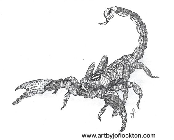 Tangled Scorpion Jo Flockton Tac Animal Coloring Pages