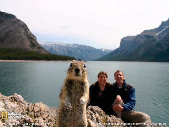 Photograph by Melissa Brandts:My husband and I were exploring Lake Minnewanka in Banff National Park-Canada when we stopped for a timed picture of the two of us. We had our camera set up on some rocks and were getting ready to take the picture when this curious little ground squirrel appeared, became intriqued with the sound of the focusing camera and popped right into our shot! A once in a lifetime moment! We were laughing about this little guy for days!!